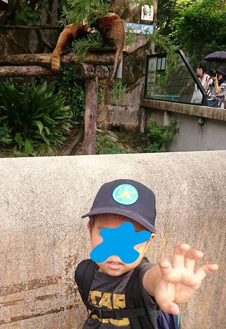 野毛山動物園・レッサーパンダの前で