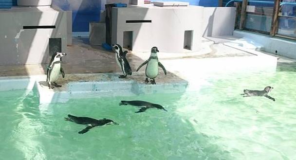 野毛山動物園・ペンギン
