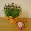母の日~可愛らしいお花をプレゼントしてもらいました♪