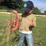 長男、初めてのお芋掘り!